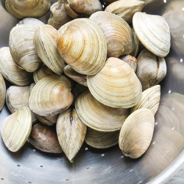 clams in a colander.