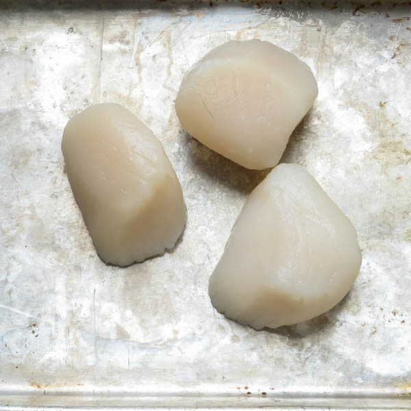 Fresh U 10 scallops on a tray.
