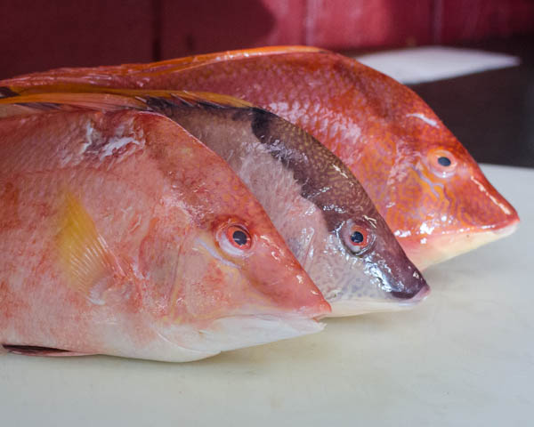 Hogfish Adriatic Hails From Islamorada