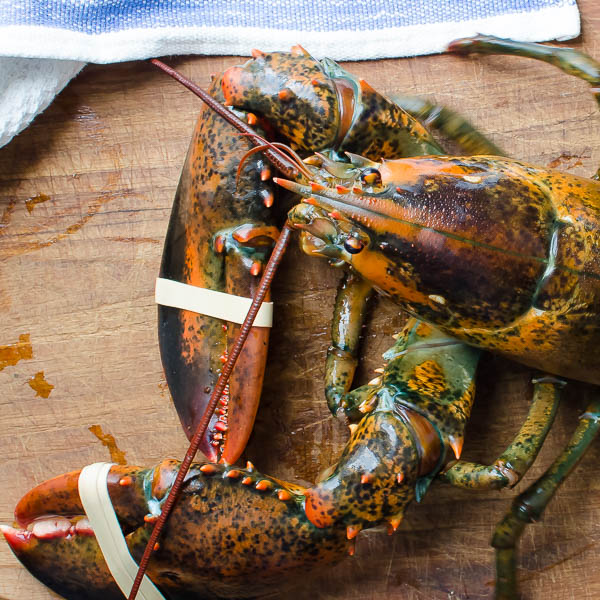 Homemade Lobster Stock | Garlic + Zest