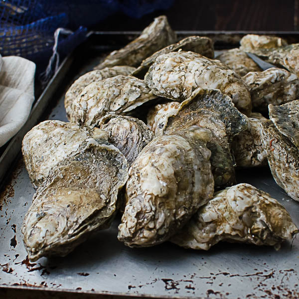 whole oysters
