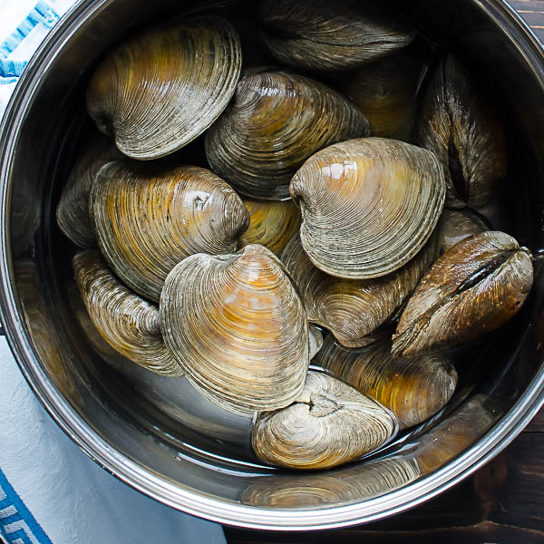 middleneck clams