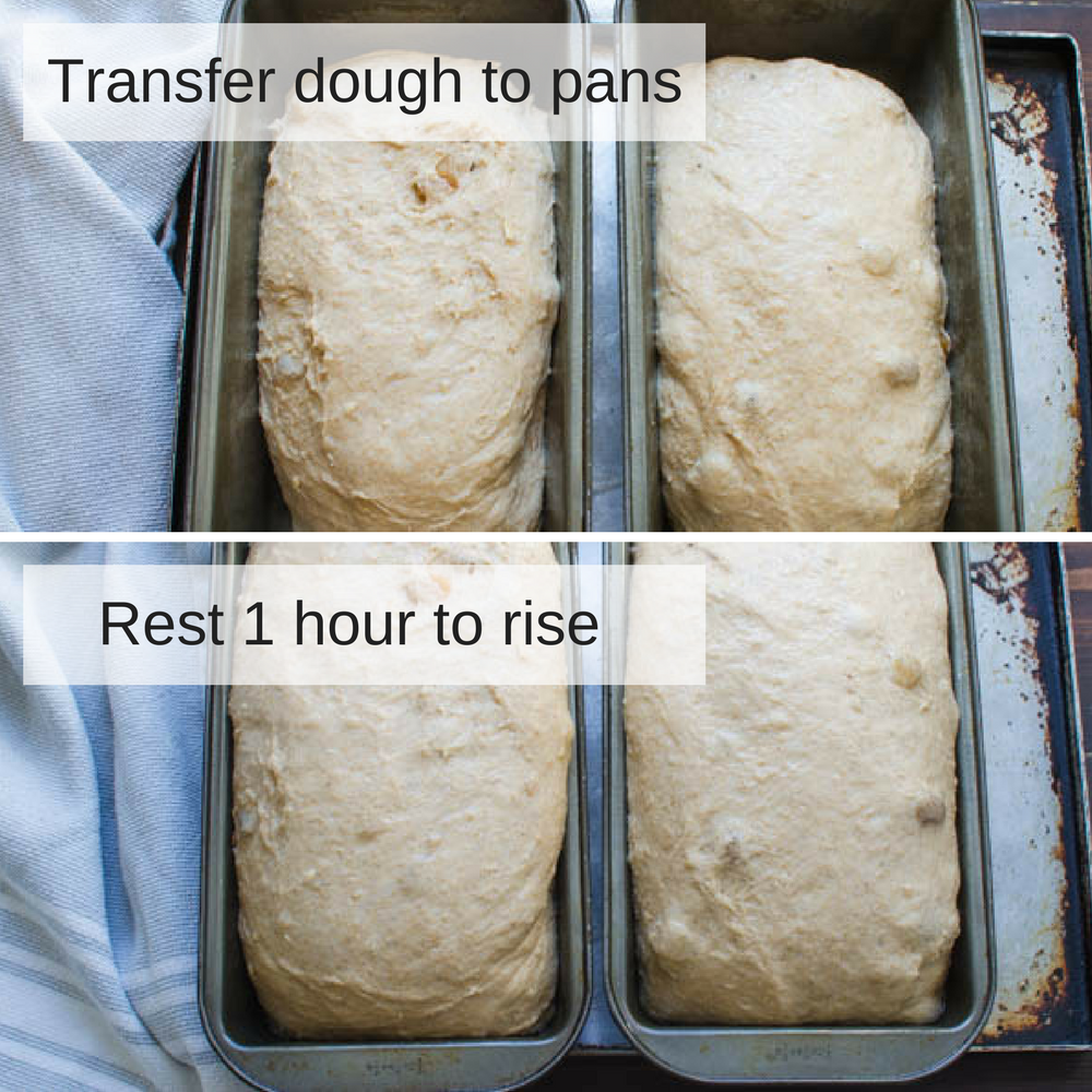 letting dough rise in the pans.