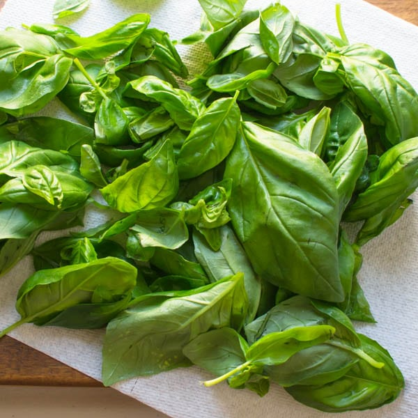 a mound of fresh basil leaves.