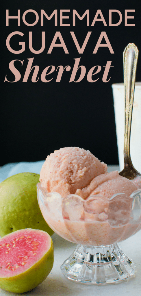 Looking for simple guava desserts? How about a homemade sherbet? Slightly richer than guava sorbet, this tropical dessert is luscious and easy to make. #guavasherbet #guavasorbet #guavaicecream #homemadesherbet #homemadeicecream #guavas #pinkguava #icecreamrecipes #sherbetrecipe #tropicalfruit #tropicaldessert #guavadessert #summerfruitdessert #fruitdessert #tropicalfruit #guavasyrup #simplesyrup #skimmilksherbet