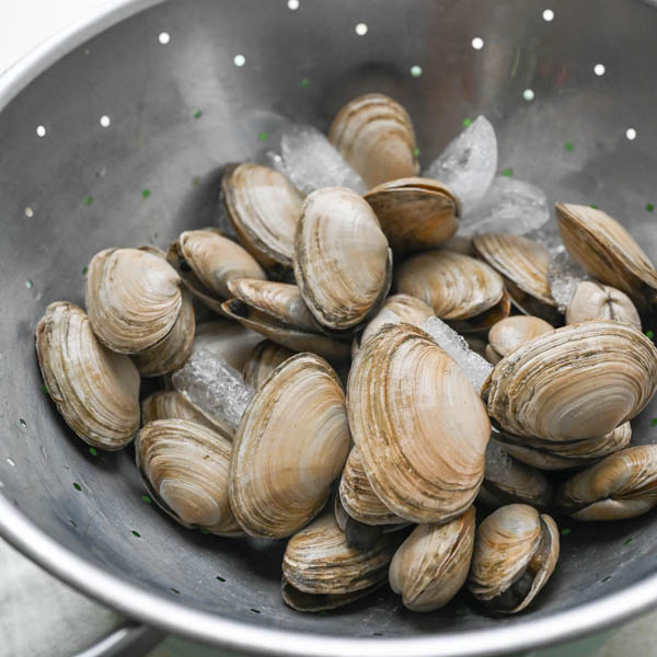 Fresh soft shell or Ipswich clams in a colander.