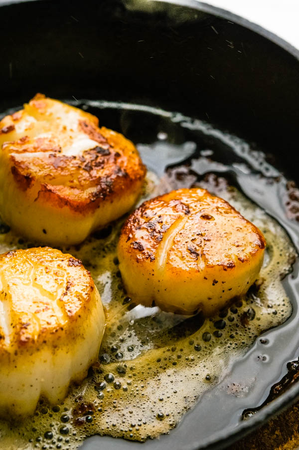 pan seared scallops in a cast iron skillet with a golden crust.