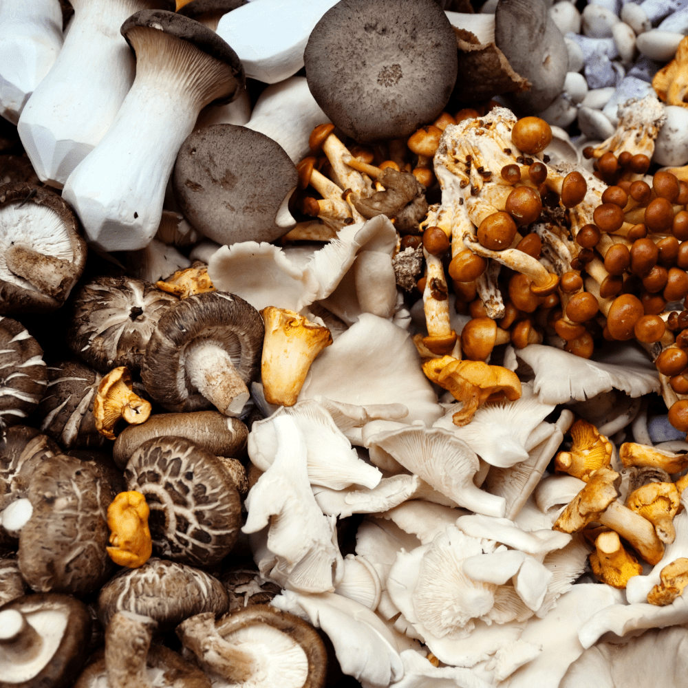 An image of a variety of mushrooms.