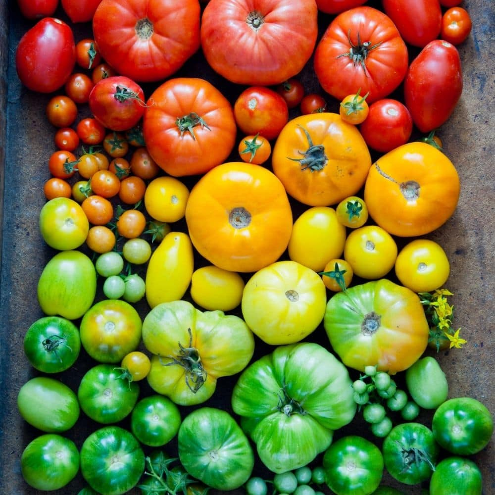 a rainbow of tomatoes for the omelette recipe.